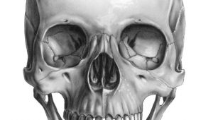 Skulls Drawing Reference Skull Front Art Pinterest Skull Skull Art and Drawings