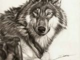 Speed Drawing Realistic Wolf 109 Best Wolf Images Wolf Drawings Art Drawings Draw Animals