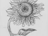 Sunflower Drawing Easy Step by Step How to Draw A Sunflower Step by Step Easy Google Search