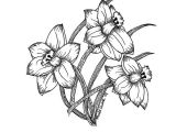 Tumblr Flowers Drawing Easy How to Draw A Daffodil Easy Lettering Line Drawing Motivation How to