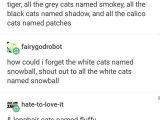 Tumblr Name Drawing I D Name A Calico Female Calipso and Male Apollo or Rhett