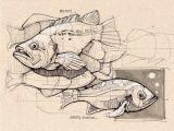 Two Animals Combined Drawing Die 316 Besten Bilder Von Zeichnungen Zeichnungen