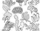 Underwater Drawing Ideas Drawing Underwater Coral Reef Coral Reef Pinterest Coral Reef