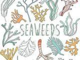 Underwater Drawing Ideas Drawing Underwater Coral Reef Drawings Pinterest Coral Reef