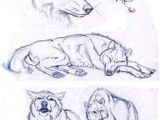 Wolf Drawing 8 206 Best Wolf Sketch Images In 2019 Drawing Techniques Animal