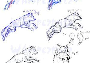 Wolf Drawing Grid Anatoref Art Pinterest Drawings Animal Drawings and Sketches