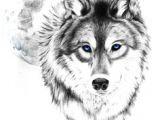 Wolf Drawing Grid Die 28 Besten Bilder Von Pencil Drawing