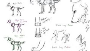 Wolf Drawing Guidelines 109 Best Wolf Images Wolf Drawings Art Drawings Draw Animals