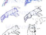 Wolf Drawing Lessons Guides to Drawing Wolves How to Pinterest Drawings Animal