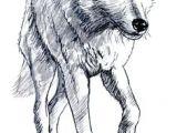 Wolf Drawing Made Easy 180 Best Wolf Drawings Images Drawing Techniques Drawing