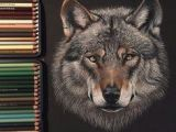 Wolf Drawing On Black Paper 157 Best Colored Pencil Blending Images In 2019 Colouring Pencils