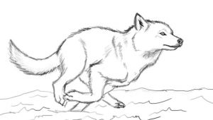 Wolf Drawing One Line when You Run Make Sure You Run to something and Not Away From