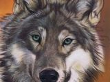 Wolf Drawing Pastel 324 Best Wildlife Wolf Images Wildlife Art Wolf Drawings Wolves