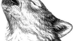 Wolf Drawing Pattern Wolf Drawing Google Search Patterns Drawings Wolf Sketch Wolf