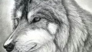 Wolf Drawing Real 109 Best Wolf Images Wolf Drawings Art Drawings Draw Animals