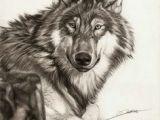 Wolf Drawing Real Die 724 Besten Bilder Von Wolf In 2019 Draw Animals Wolf Pictures