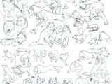 Wolf Drawing Reference 124 Mejores Imagenes De Wolf and Dog Anatomy References En 2019