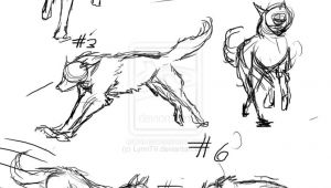 Wolf Drawing Reference Drawing Wolf Ideas Google Search Draw Photo Animal Anatomy