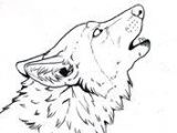 Wolf Drawing to Trace 332 Best Wolves Images Wolf Drawings Animal Drawings Art Drawings