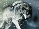 Wolf Drawing Wallpaper 4k 58 4k Wolf Wallpapers On Wallpaperplay