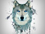 Wolf Drawing Watercolor Fractal Wolf Wallpaper by S 0d Free On Zedgea