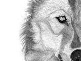 Wolf Mating Drawing 140 Besten Wolf Tattoo Bilder Auf Pinterest In 2019 Drawings