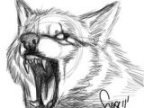 Wolf Roaring Drawing 180 Best Wolf Drawings Images Drawing Techniques Drawing