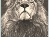 Wolf Roaring Drawing Realistic Drawings Of Animals 42 Incredibly Realistic and Adorable