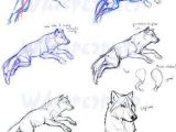 Wolves Drawing Head Guides to Drawing Wolves How to Pinterest Drawings Animal