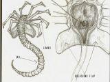 Xenomorph Drawing Easy Facehugger by Mikujin Aliens Xenomorph Alien Vs Alien Vs Predator