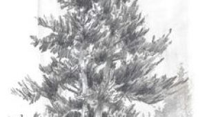 Y Tree Drawing 156 Best Drawing Trees Images In 2019 Drawing Trees Tree Drawings